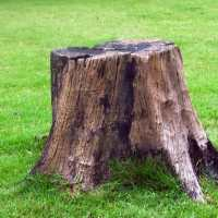 What to do with a Tree Stump | Elite Tree Care