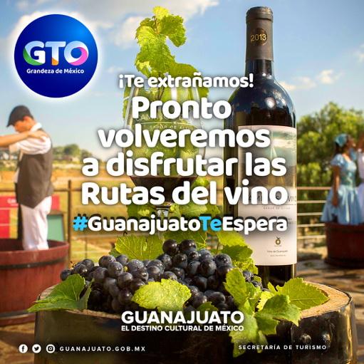Guanajuato ruta del vino