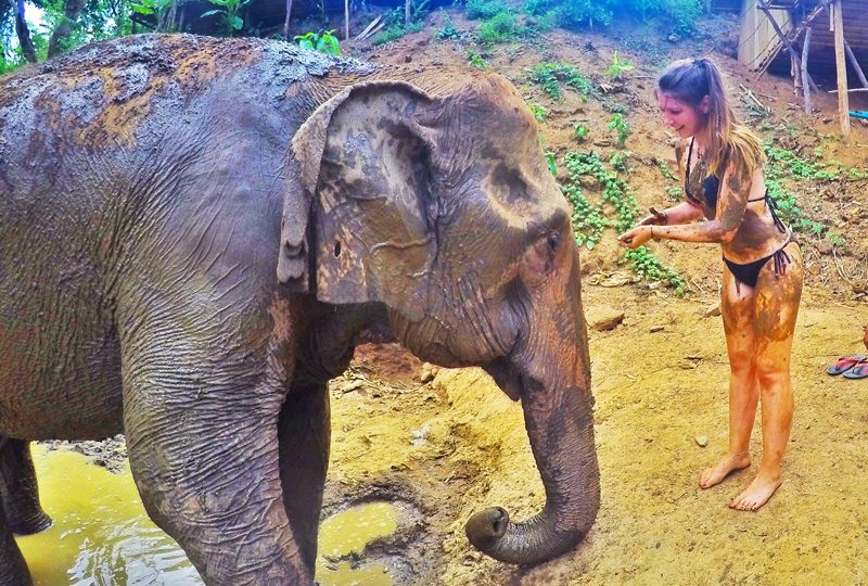 chasing the dream - elephant sanctuary