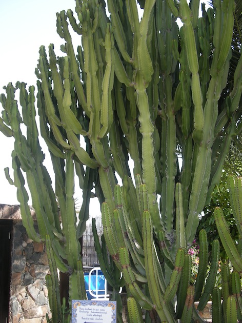 Cactus Grand Res small.jpg
