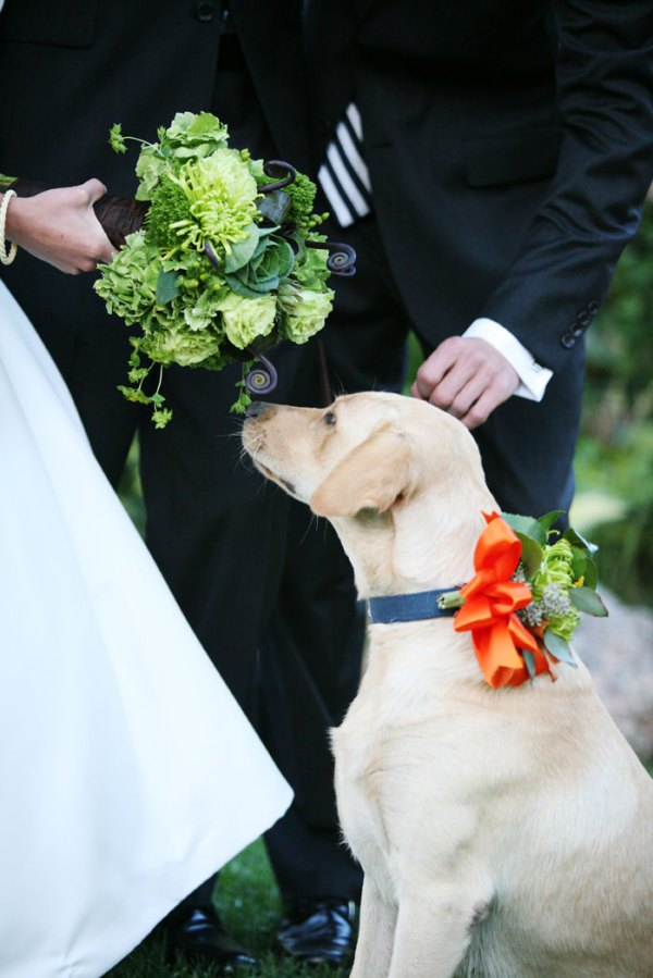 dogs in weddings Chaz Hound Dog Forums