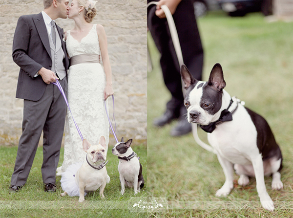 Bulldog-Bridal