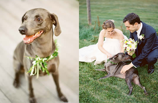 Wedding-Puppy