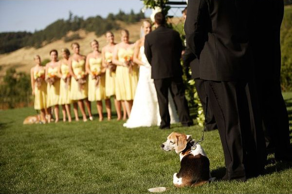 beagle-wedding