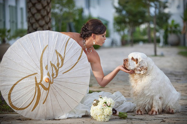 clumber-spaniel-wedding