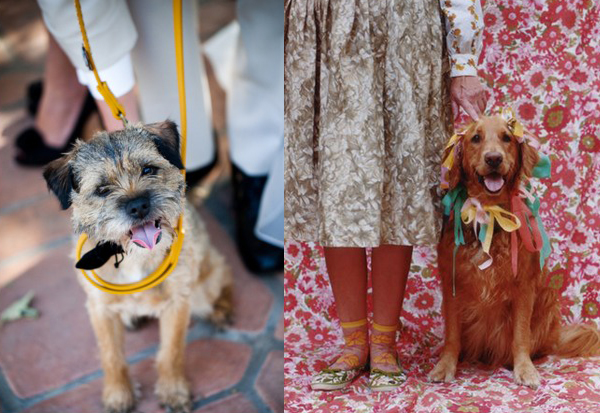 wedding-dogs