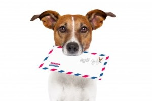 animal. dog, cat, animal communicator