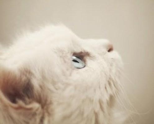 animals pet cat dog