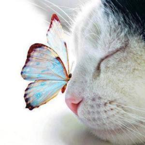 animal, dog, cat, spirituality