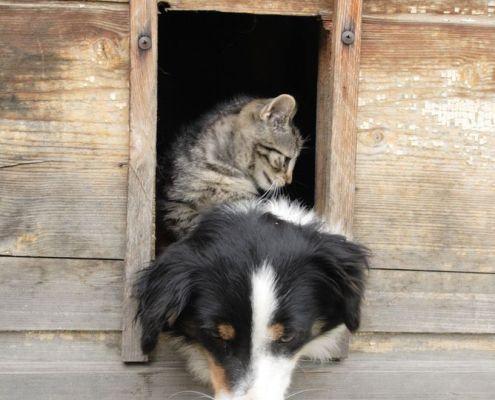 cat, dog, horse, animal communicator