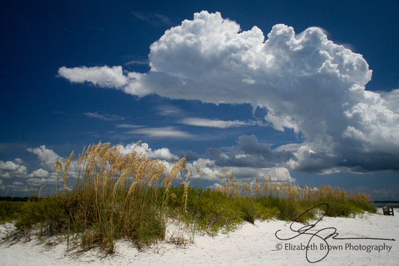 Honeymoon Island State Park, Dunedin, FL