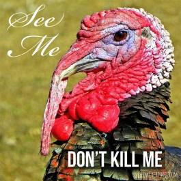 Turkey says See me Dont kill me