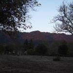 Elizabeth Montague photos of dusk in Meiner's Oaks..