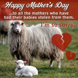 Happy Mother's Day to all the mother's who have had their babies stolen from them.
