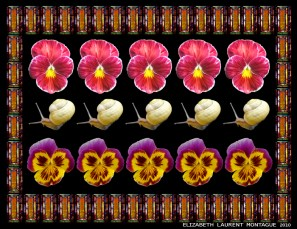 Snails and Pansies