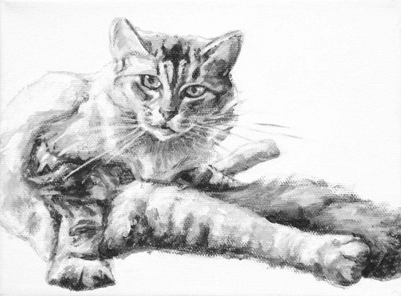 Akimbo depicts a cat looking up from a seated grooming position. Legs projecting in every which direction. Painted by Elizabeth Lisa Petrulis.