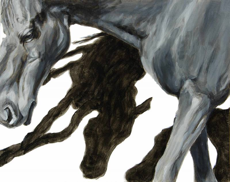 zoomed in image of horse showing two horse shadows beneath its neck and front legs