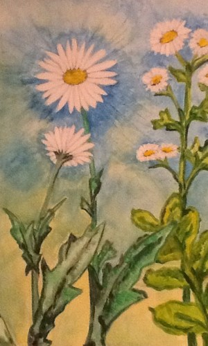 daisy watercolour painting