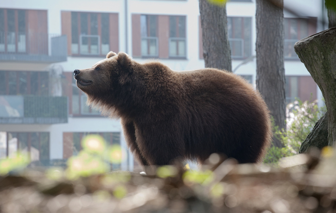 Elk Grove Realtor Closes Home Clawed By Bears