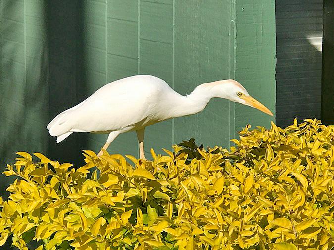Maui Birds Found on Ka'anapali Beach