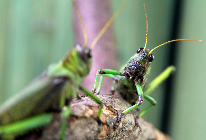 Perseverance Means No Cricket Sounds Allowed in Sacramento Real Estate