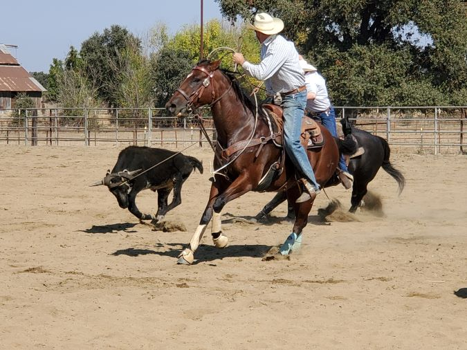 Is Team Roping a Hobby?