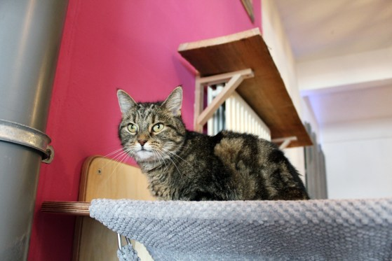 pebbles-kitty-cafe-2