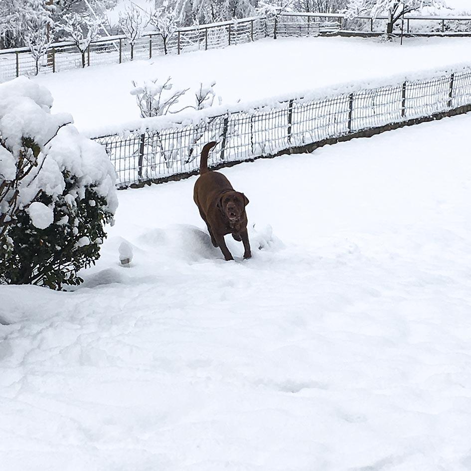 El Jardí_nieve 8