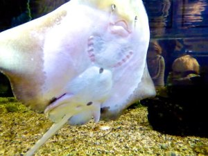 Aquarium Naturzentrum Ameland 2015-09-16 Foto Elke Backert (1)