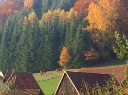 Pferde im Novemberwald