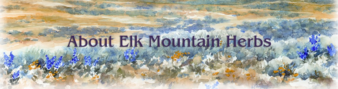 Elk Mountain Herbs, Wyoming flowers watercolor