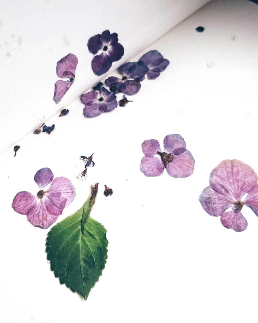 getrocknete blüten lesezeichen laminieren