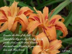 lilies meme