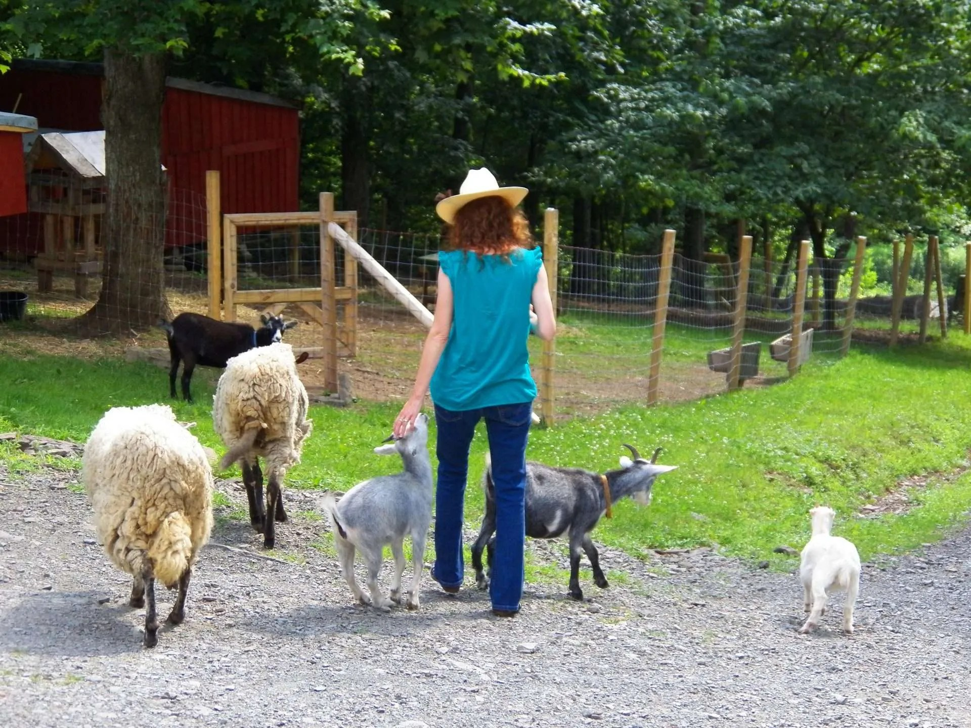 Elle with the goats and sheep