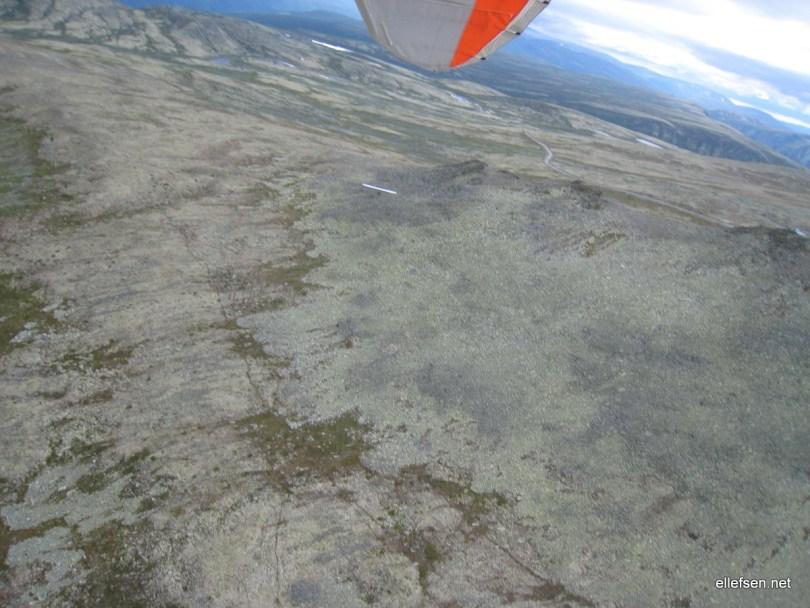 Olav trying to soar up on Blåhøe