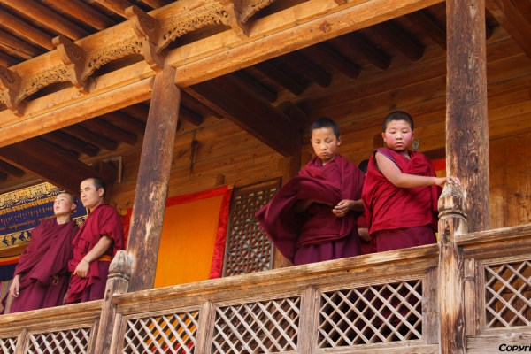 Monks at Gomar monastery near Rebkong (Tongren)