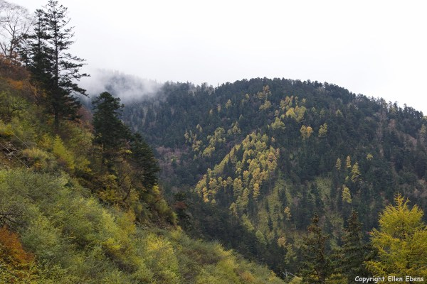 Beautiful mystical landscape with autumn colours at the Danyun Scenery, a valley about 30 km away from Huanglong NP