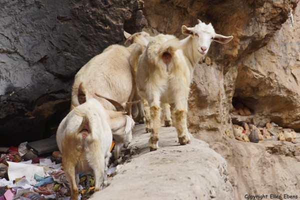 Goats at a sacred place in a small valley, Songpan County