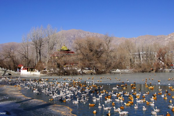 Lhasa, The Lukhang (Naga temple) in the lake behind the Potala Palace.