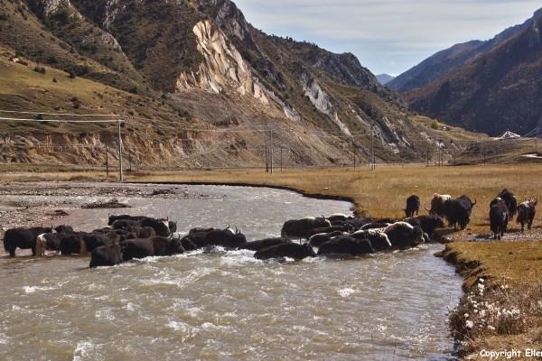 Nangchen landscape yaks river