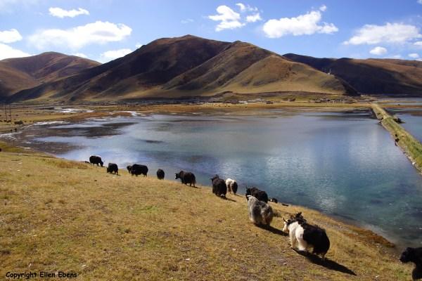 Derge to Yushu