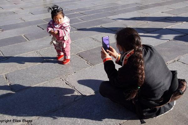 Lhasa baby girl