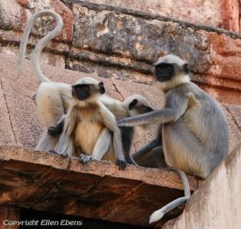 Monkeys at the Virupaksha temple of Hampi