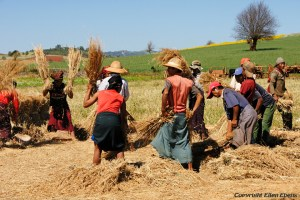 On the road from Pindaya to Inle Lake, farmers working on the fields