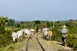 On road from Mandalay to Monywa, it's a busy traffic on the railroad