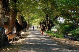 Pyay, a small road with beautiful trees