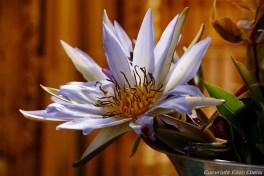 Near Pyay, flower at the Shenattaung Pagoda