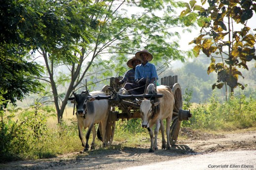 Local transport on the road from Pyay to Pathein