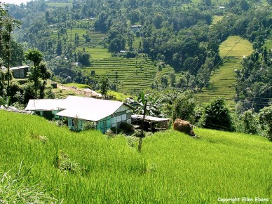 Gangtok to Kalimpong