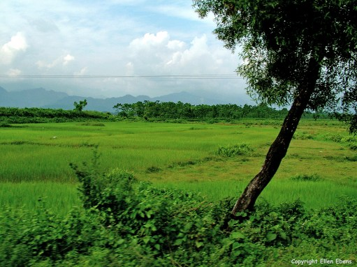 West Bengal plains